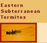 eastern termites